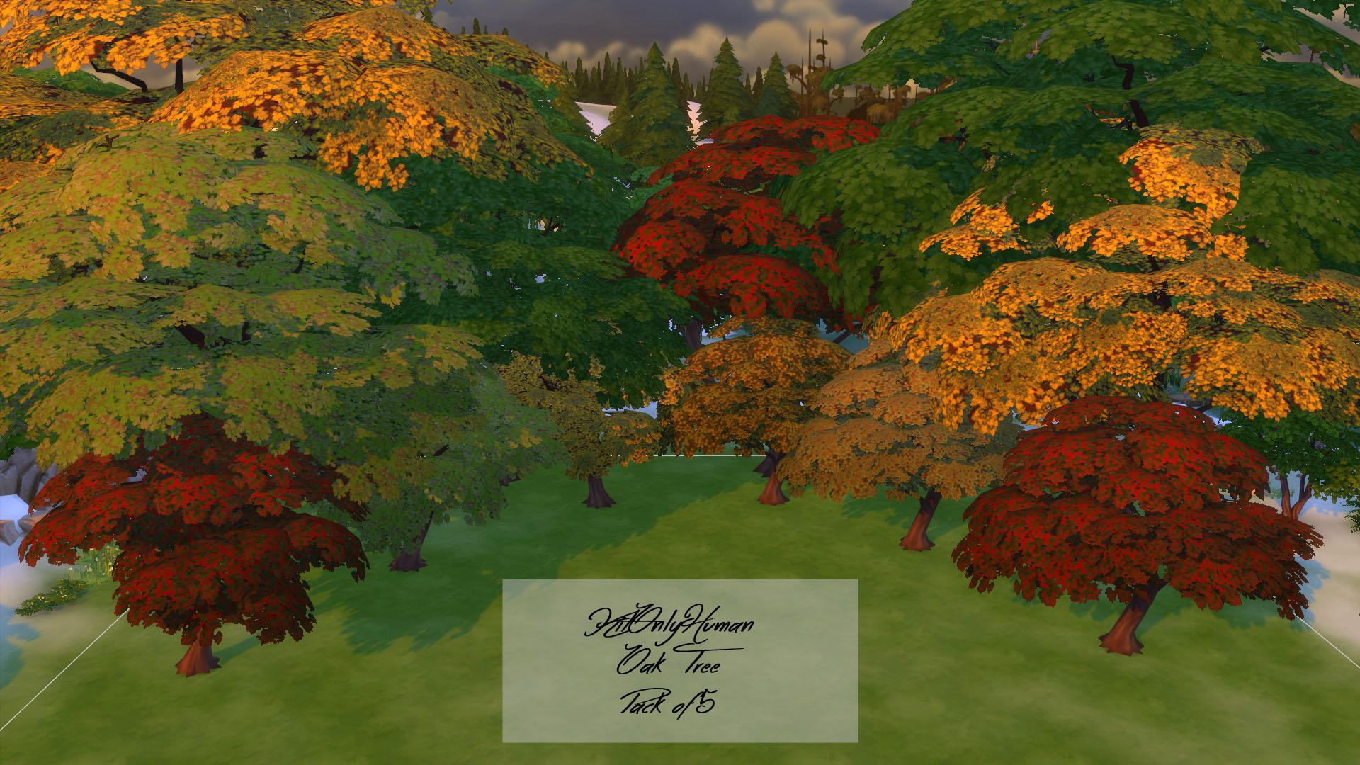 Различные расцветки листьев